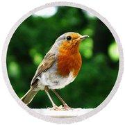 Robin Bird Photograph Round Beach Towel