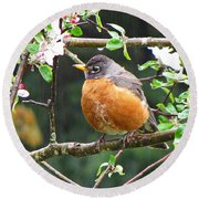 Robin In Apple Tree Round Beach Towel