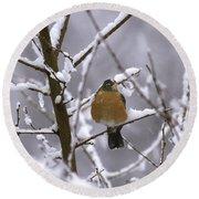 Robin In Snow Round Beach Towel