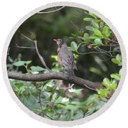 Robin In The Brush Round Beach Towel