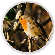 Robin In The Hedgerow Round Beach Towel