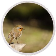 Robin On A Log Round Beach Towel