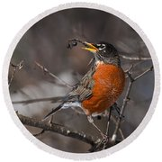Robin Pictures 100 Round Beach Towel