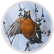 Robin Pictures 84 Round Beach Towel