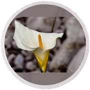 Rock Calla Lily Round Beach Towel
