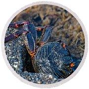 Rock Crab At He'eia Kea Pier Round Beach Towel