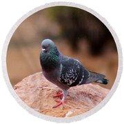 Rock Pigeon 030515 A Round Beach Towel