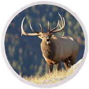 Rocky Mountain Bull Elk Bugling Round Beach Towel