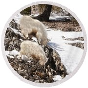 Rocky Mountain Goats - Mother And Baby Round Beach Towel