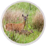 Roe Deer Capreolus Capreolus With Two Fawns Round Beach Towel