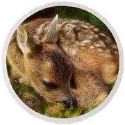 Roe Deer Fawn Round Beach Towel