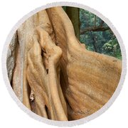 Root Of A Tree Nature Background Round Beach Towel