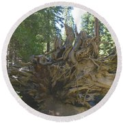 Roots Round Beach Towel by Barbara Snyder