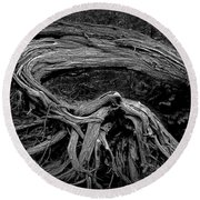 Roots Of A Fallen Tree By Wawa Ontario In Black And White Round Beach Towel