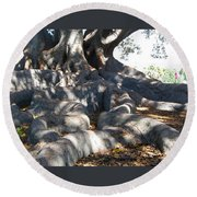 Roots Of Large Fig Tree Round Beach Towel