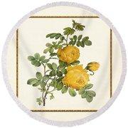 Rosa Sulfurea -yellow Rose  Square Round Beach Towel