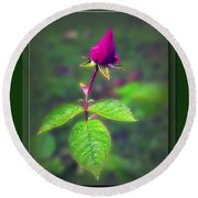 Rose Bud Round Beach Towel by Brian Wallace