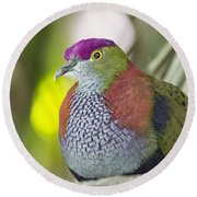Rose-crowned Fruit Dove Round Beach Towel
