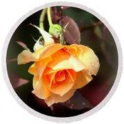 Rose - Flower - Card Round Beach Towel