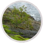 Rose Hip Bush Round Beach Towel