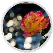 Rose In Dappled Afternoon Light Round Beach Towel