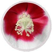 Rose Mallow - Honeymoon White With Eye 03 Round Beach Towel