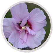 Rose Of Sharon With Bee Round Beach Towel