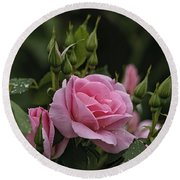 Rose Pictures 328 Round Beach Towel