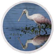 Roseate Spoonbill Hunting Round Beach Towel