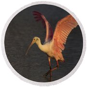 Roseate Spoonbill Photograph Round Beach Towel