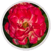 Rosey Rose Round Beach Towel