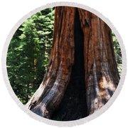Round Meadow Giant Sequoia Portrait Round Beach Towel