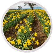 Rows Of Daffodils Round Beach Towel