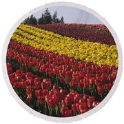 Rows Of Multicolored Tulips In Field Mount Vernon Washington Sta Round Beach Towel