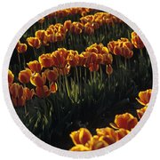 Rows Of Orange Tulips In Field Mount Vernon Washington State Usa Round Beach Towel