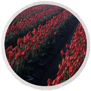 Rows Of Red Tulips Round Beach Towel