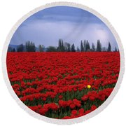 Rows Of Red Tulips With One Yellow Tulip  Round Beach Towel by Jim Corwin