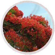 Royal Poinciana Branch Round Beach Towel