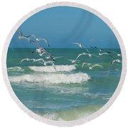 Royal Tern Frenzy Round Beach Towel by Kim Hojnacki