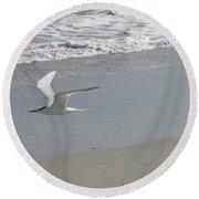 Royal Tern In Flight Round Beach Towel