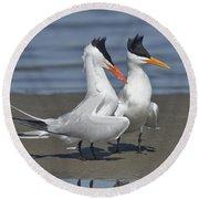 Royal Terns Dancing Round Beach Towel