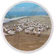 Royal Terns On The Beach Round Beach Towel