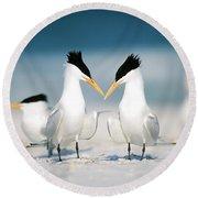 Royal Terns Round Beach Towel
