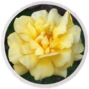 Royal Yellow Delight Rose... Round Beach Towel