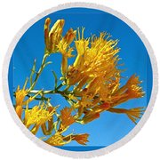 Rubber Rabbitbrush Off Hole-in-the-rock Road In Grand Staircase Escalante National Monument-utah Round Beach Towel