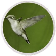 Ruby-throated Hummingbird At Flower Round Beach Towel