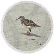 Ruddy Turnstone Wading Bird - Arenaria Interpres Round Beach Towel