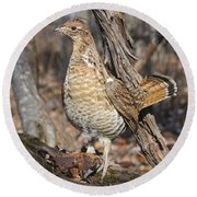 Ruffed Grouse On Mossy Log Round Beach Towel