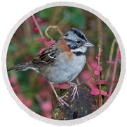 Rufous-collared Sparrow Round Beach Towel