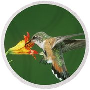 Rufous Hummingbird At Tiger Lily Round Beach Towel